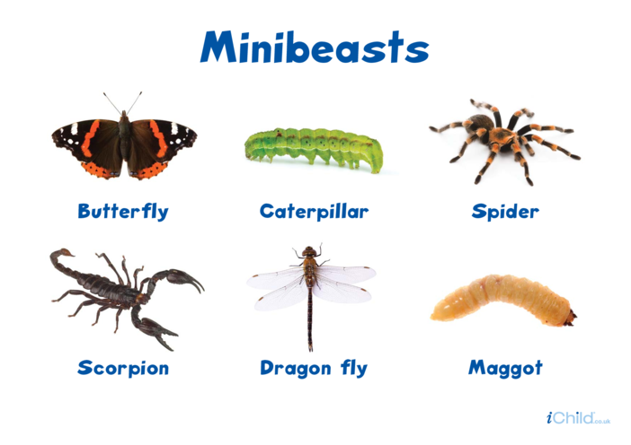 Thumbnail image for the Minibeasts Poster (2) activity.