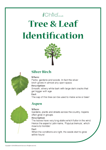 Thumbnail image for the Tree & Leaf Identification activity.
