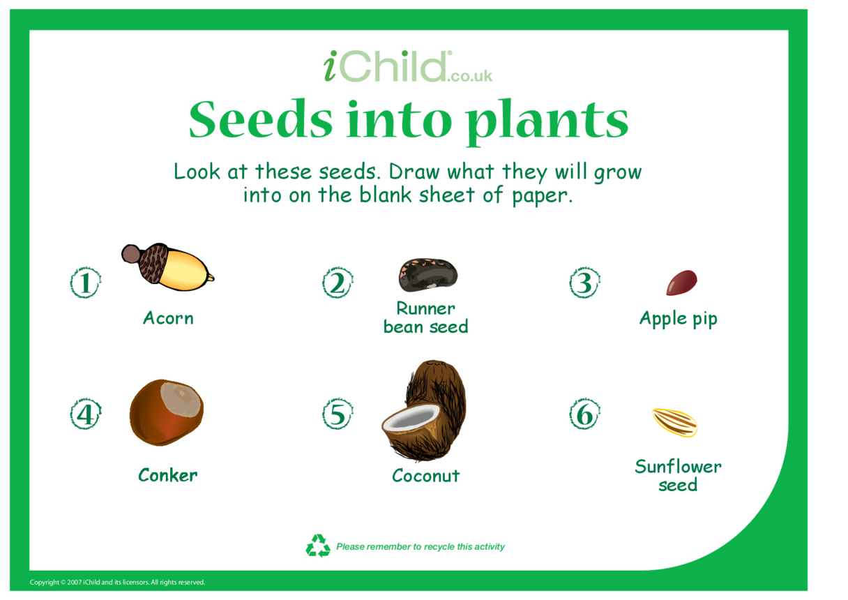 Seeds into Plants