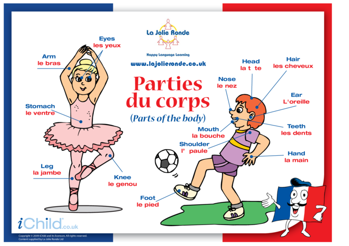 Thumbnail image for the Parts of the Body in French activity.