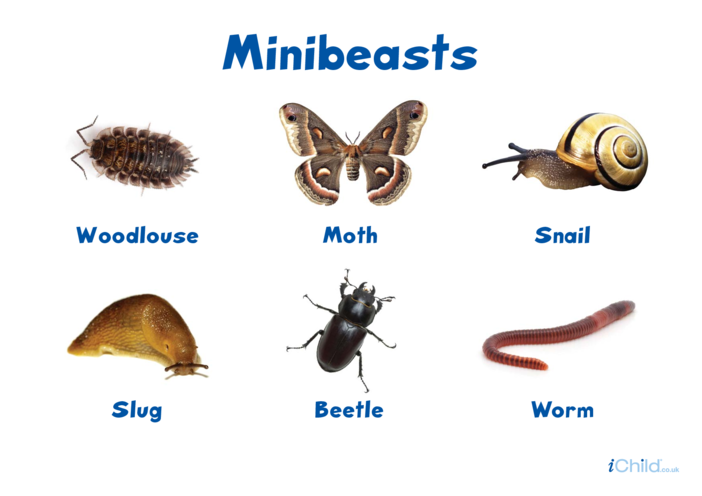 Thumbnail image for the Minibeasts Poster (3) activity.