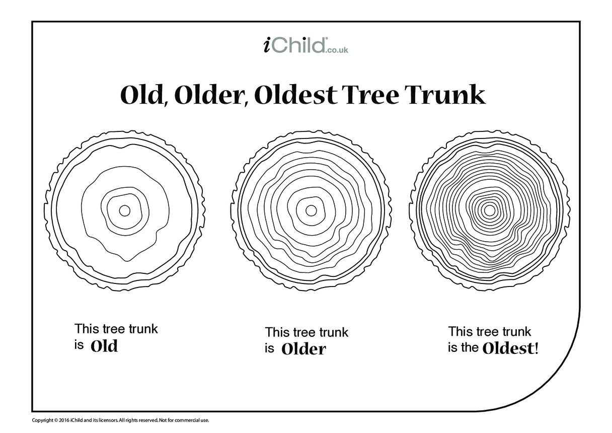Old, Older, Oldest Tree Trunks