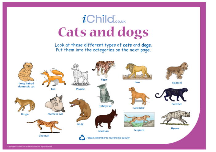 Thumbnail image for the Cats & Dogs activity.