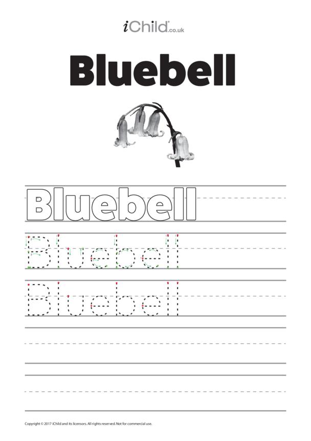 Bluebell  Handwriting Practice Sheet