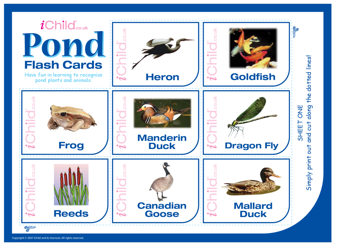 Pond Animal Flash Cards