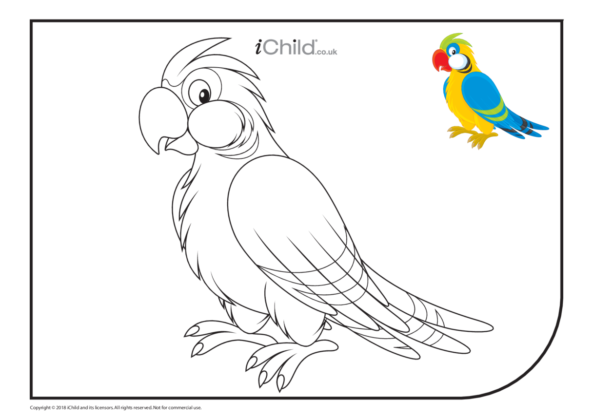 Parrot Colouring in Picture