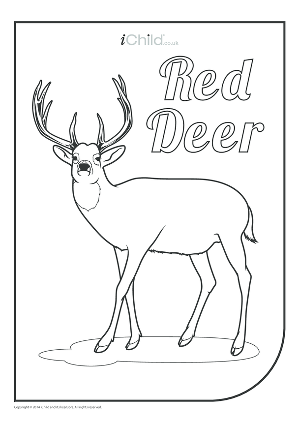 Red Deer Colouring in Picture