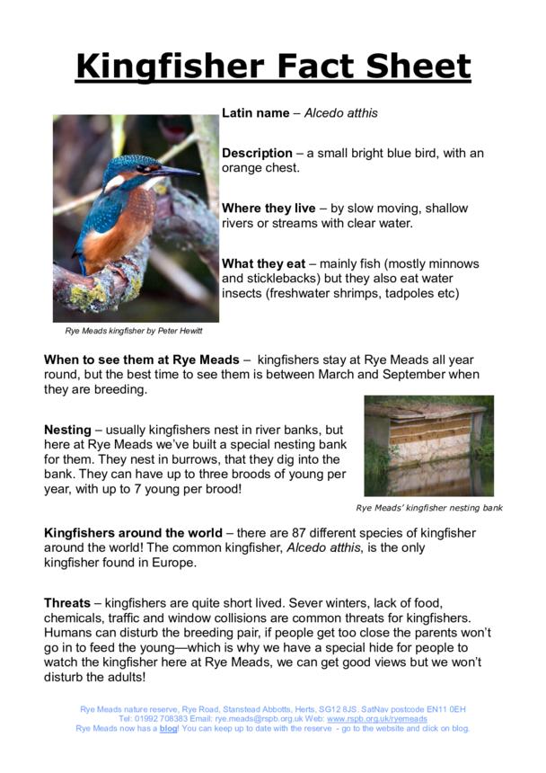 Kingfisher fact sheet