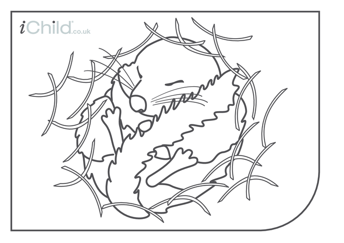 Thumbnail image for the Dormouse Colouring in picture activity.