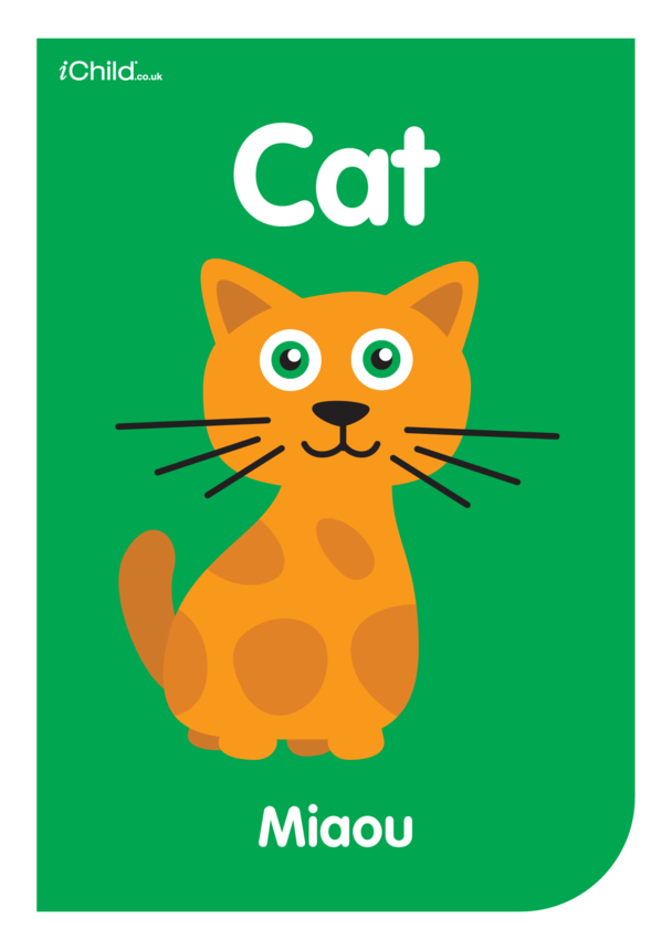 Contrasting Colours Poster: Cat