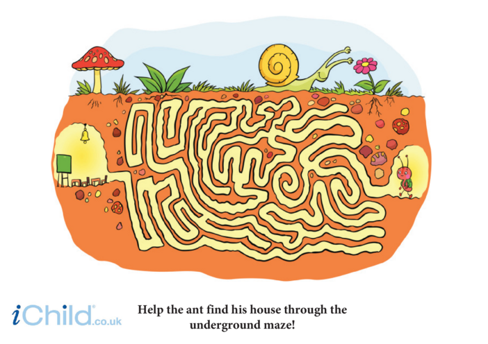 Thumbnail image for the Ant Maze activity.