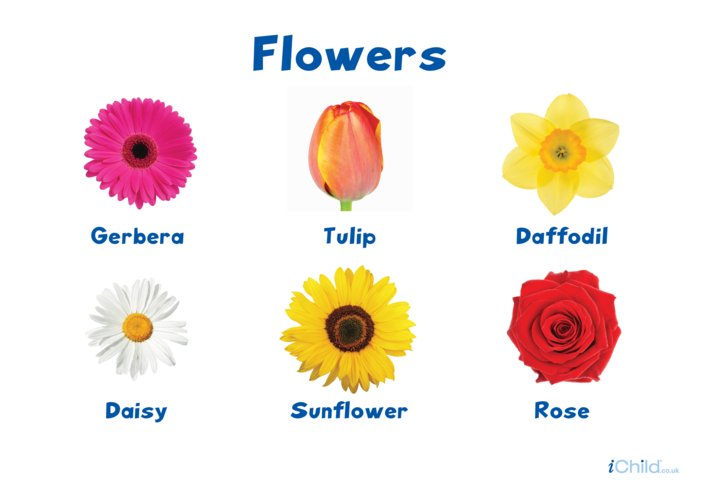 Thumbnail image for the Flowers Poster activity.