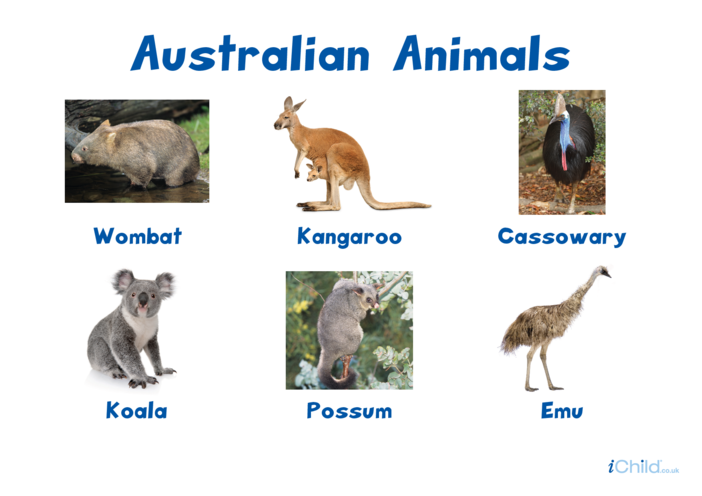 Thumbnail image for the Australian Animals - Photo Poster activity.