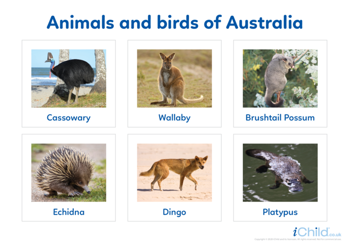 Thumbnail image for the Animals of Australia 2 - Photo Flashcard activity.