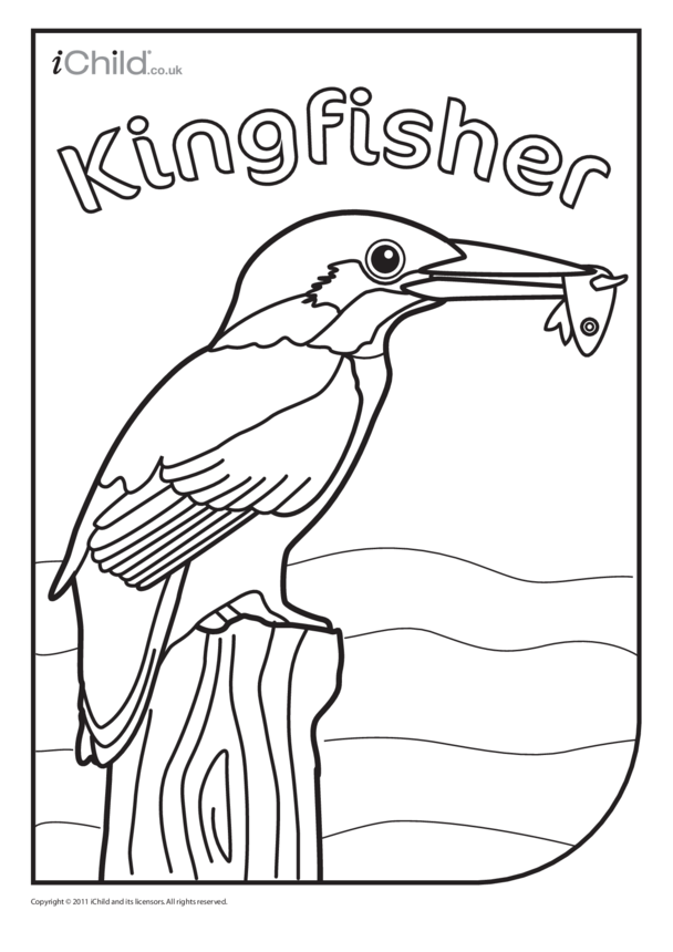 Kingfisher colouring in picture