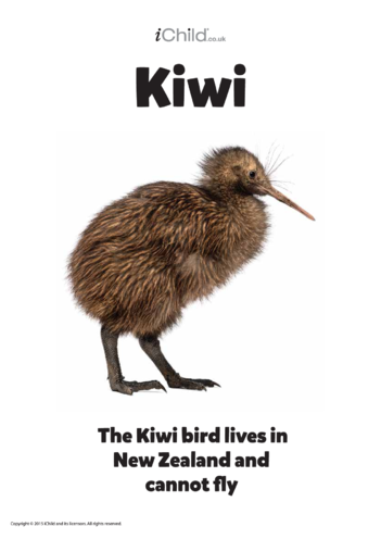Thumbnail image for the Kiwi Bird - Poster activity.