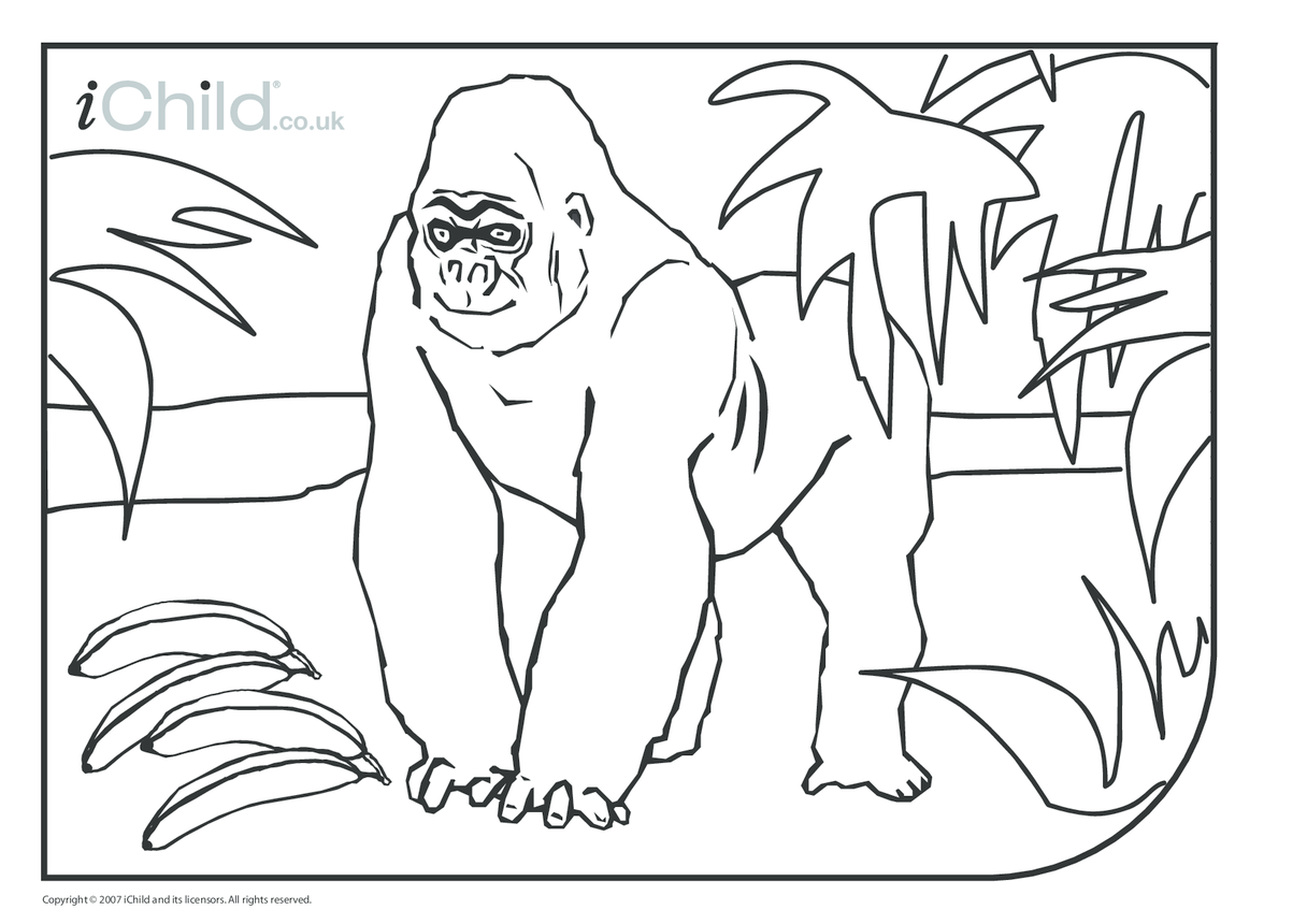 Gorilla Colouring in picture