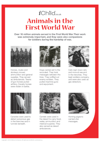 Thumbnail image for the Animals in War Fact Sheet - Poster activity.