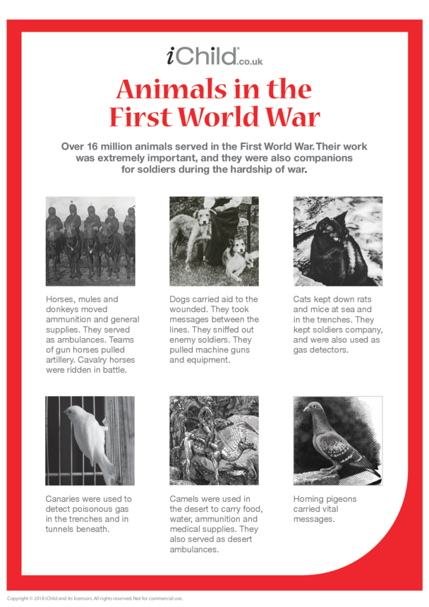 Animals in War Fact Sheet - Poster