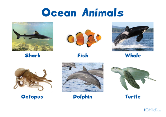 Thumbnail image for the Ocean Animals Poster activity.