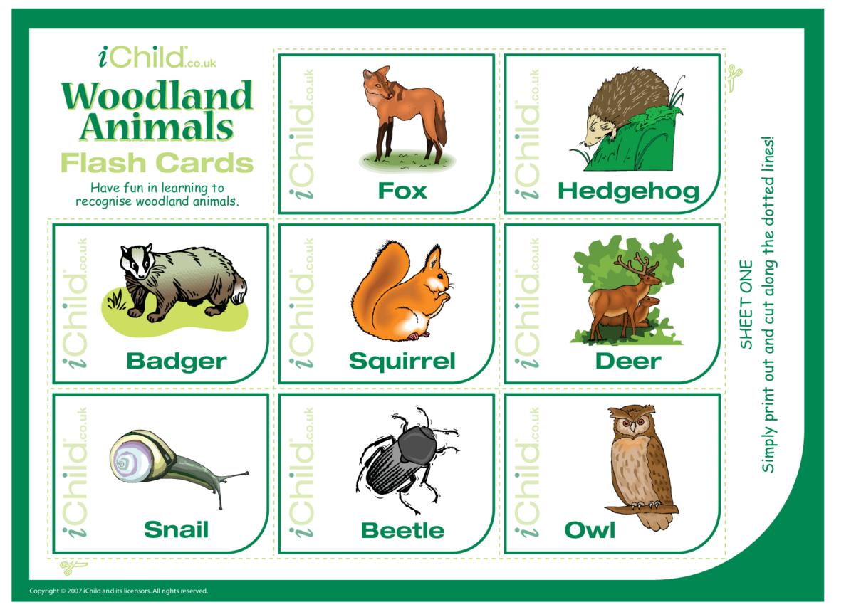 Woodland Animal Flash Cards
