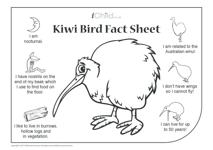 Thumbnail image for the Kiwi Bird Fact Sheet activity.