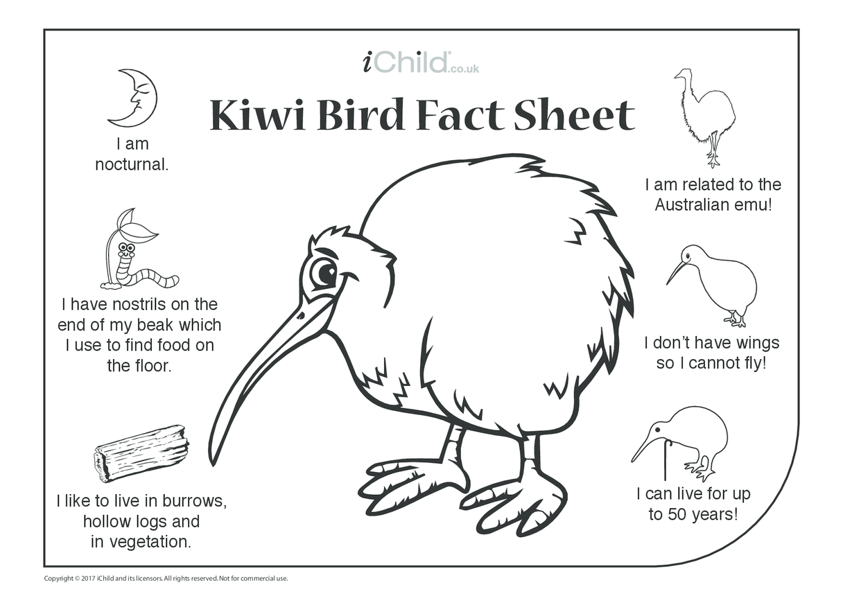 Kiwi Bird Fact Sheet Ichild