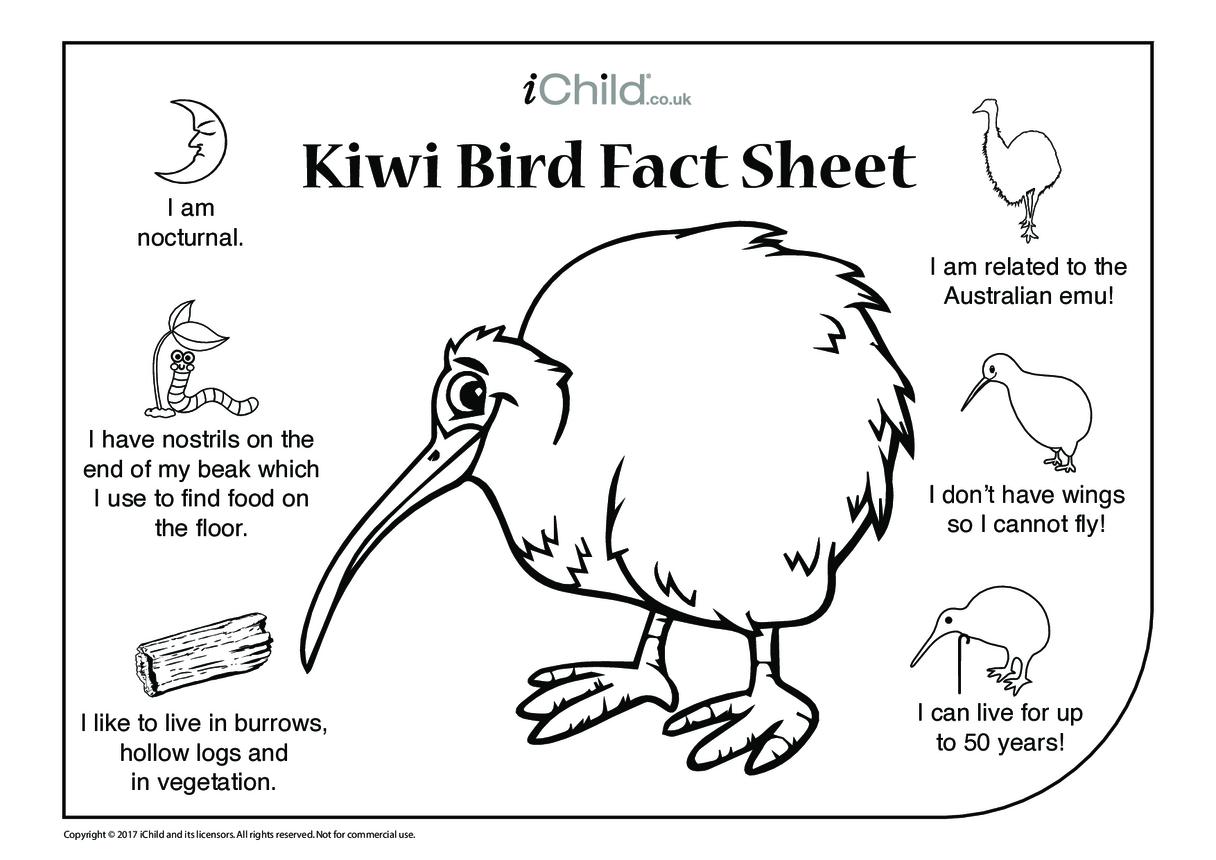 Kiwi Bird Fact Sheet