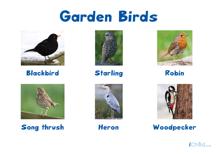 Thumbnail image for the Garden Birds Poster (second) activity.