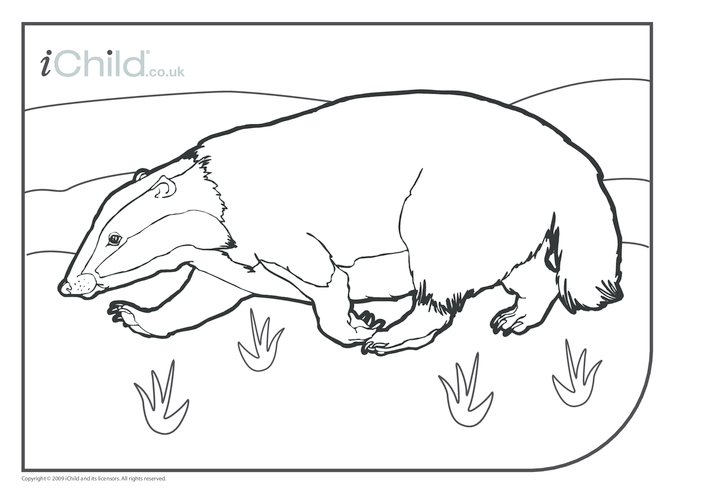 Thumbnail image for the Badger Colouring in picture activity.