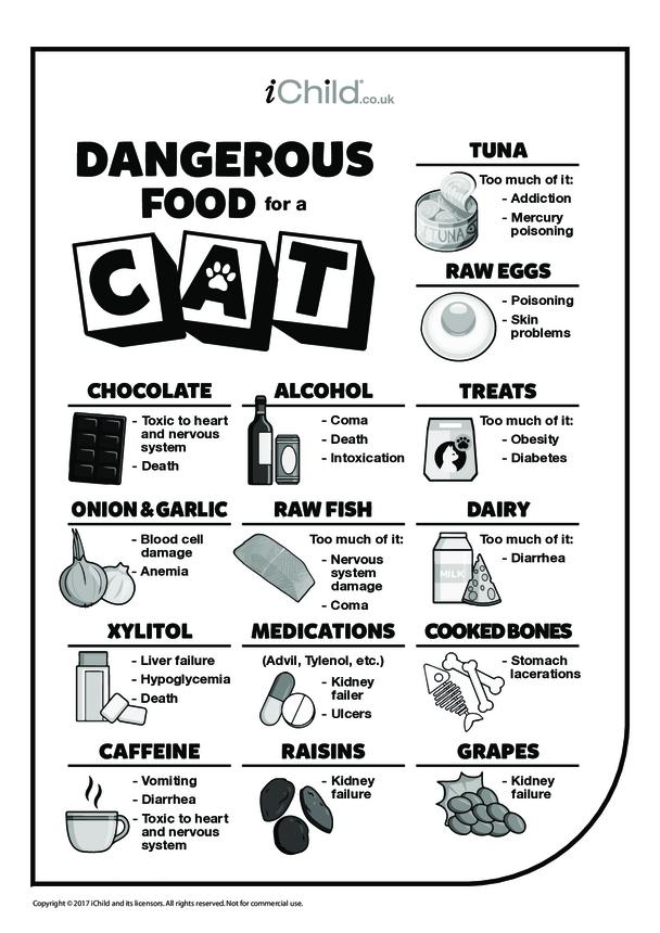 Dangerous Food for a Cat