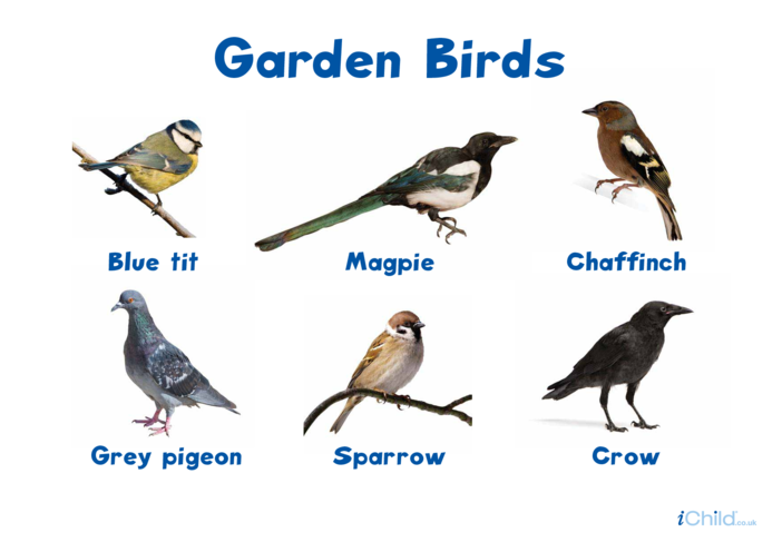 Thumbnail image for the Garden Birds (2) - Photo Poster activity.