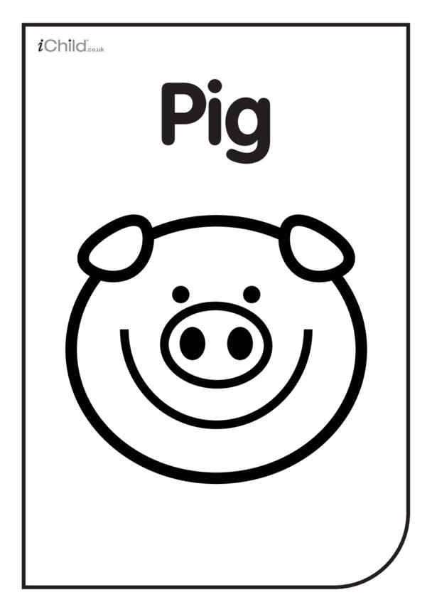 Black & White Poster: Pig Face