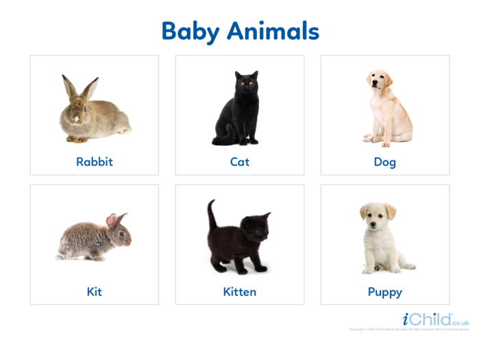 Thumbnail image for the Baby Animals - Photo Flashcard activity.