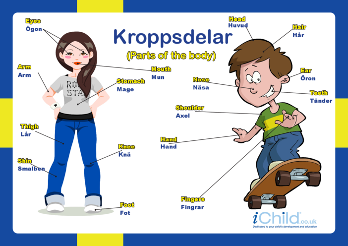 Thumbnail image for the Parts of the Body in Swedish activity.