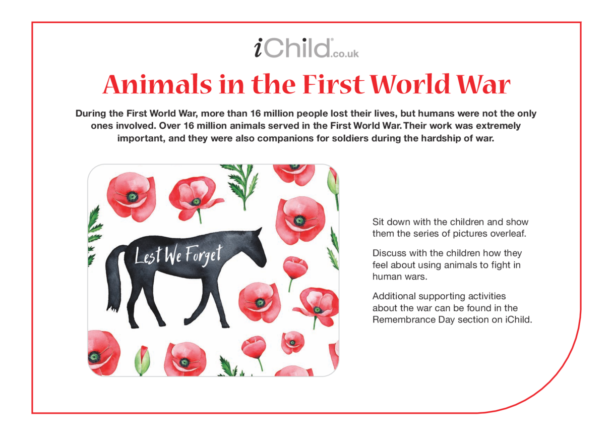 Animals in the First World War - Historical Story