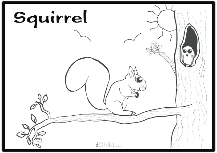 Thumbnail image for the Squirrel Colouring in Picture activity.