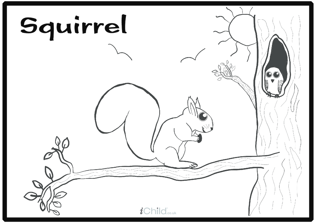 Squirrel Colouring in Picture