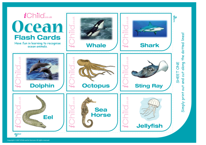 Thumbnail image for the Ocean Flash Cards activity.