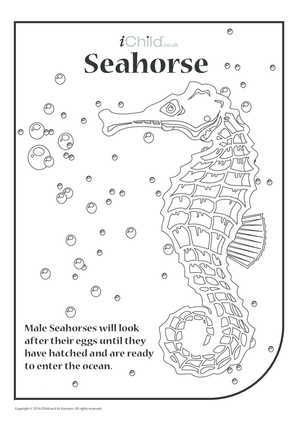 Seahorse Colouring in Picture