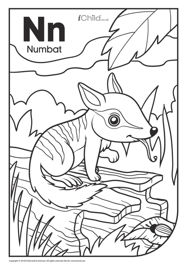 N is for Numbat Colouring in Picture