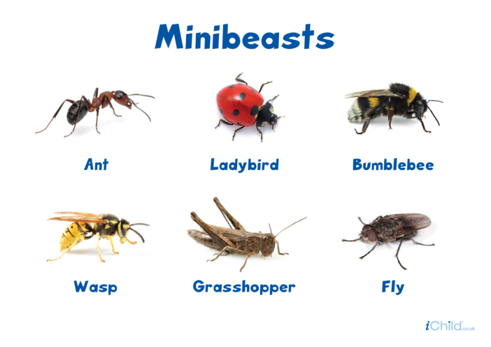 Thumbnail image for the Minibeasts Poster activity.