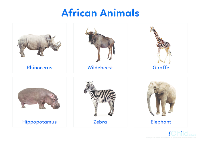 Thumbnail image for the African Animals - Photo Flashcard activity.