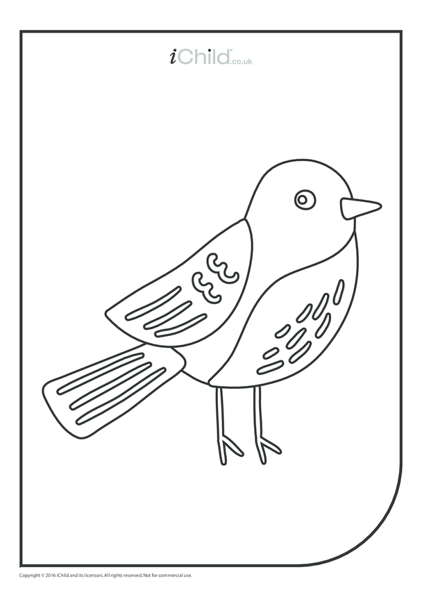 Robin Colouring in Picture