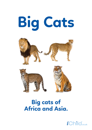 Thumbnail image for the Big Cats - Photo Poster activity.