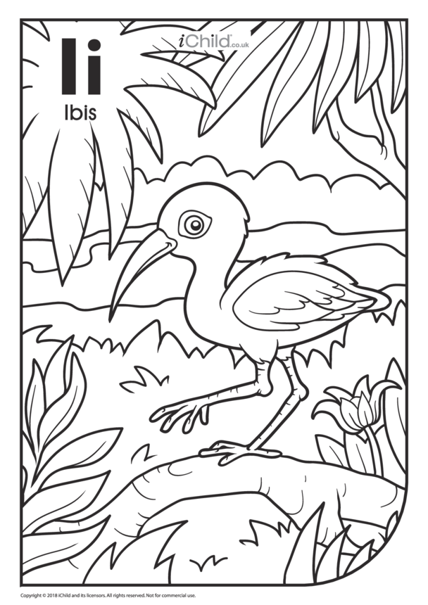 I is for Ibis Colouring in Picture
