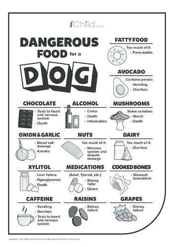 Thumbnail image for the Dangerous Food for a Dog activity.