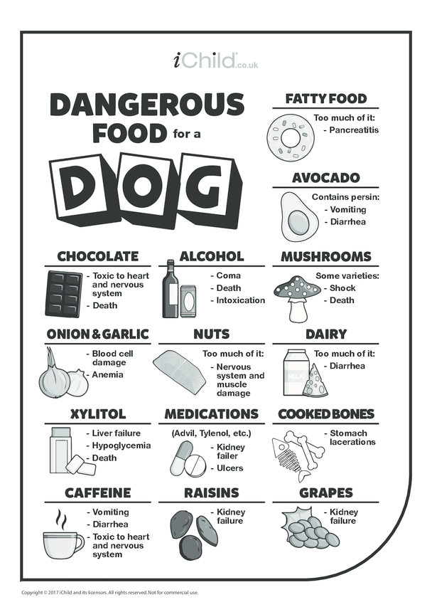 Dangerous Food for a Dog