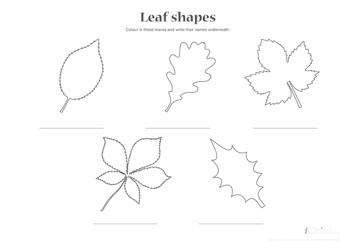 Thumbnail image for the Leaf Shapes activity.