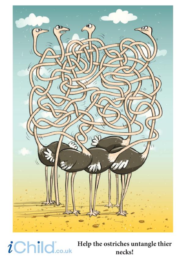 Ostrich Maze